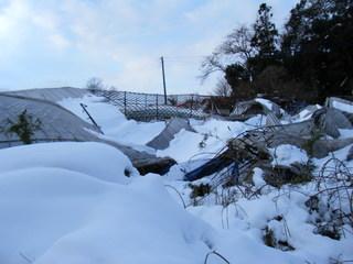 2014_0210雪被害0004.JPG