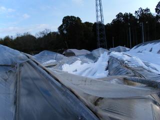 2014_0210雪被害0006.JPG